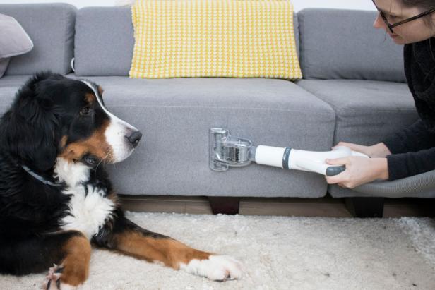 Comment nettoyer si vous vivez avec un animal de compagnie