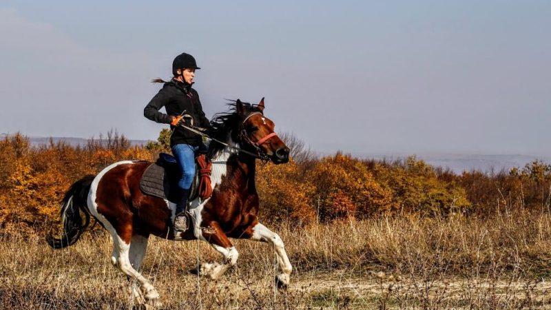 6 très bonnes raisons de faire de l'équitation